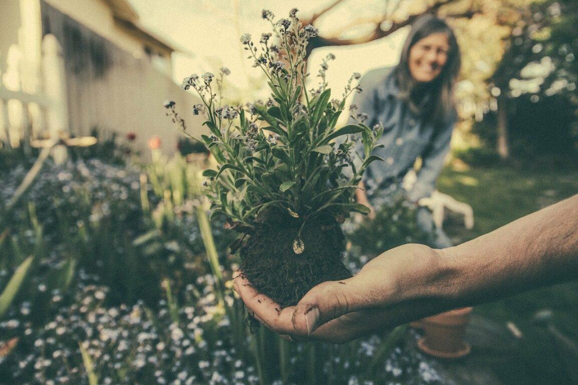 Cómo abrir una empresa de jardinería 1