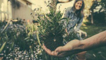 Cómo abrir una empresa de jardinería