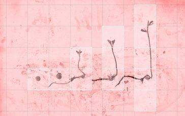 arteimpresa michele guido  study para el proyecto de jardin ce1b  03.02.15  livin coral