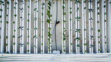 Agricultura vertical: ¿una solución sostenible para el futuro?